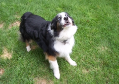 All About Dogs...Walking and Pet Care - Littleton, CO