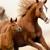 El Herradero Horse Feed