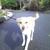 Cindy's Pet Sitting / Dog Walking