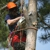 Zamora Tree Service LLC