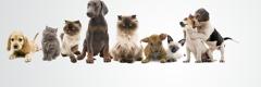 Algiers Animal Clinic