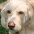 Noah's Bark Doggie Daycare - CLOSED