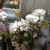 CitiFloral - A Little Shop of Flowers