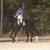 Dogwood Trails Equestrian Center