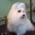 Magic Scissors Dog Grooming