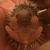 Prickle Farms Hedgehogs