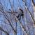 Schwan Tree Care