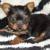 Lola Bell's Pet Grooming
