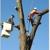 Big Mack's Tree Services