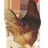 Town Line Hatchery & Poultry Farm