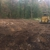 williams land clearing ,grading and timber logger ,llc