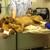 Kleinbrook Animal Hospital