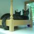 A Cat Clinic - CLOSED