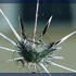 Stop A Crack Windshield Repair