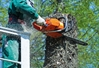 What's the difference between an arborist and a tree trimmer? Learn the ins and outs of tree removal.