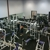Milpitas Fitness For 10, Inc