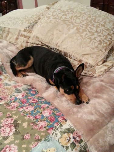 Northeast Ohio SPCA Inc - Cleveland, OH. Her name was Tinker bell. We renamed her Zoey.  She has made our lives  complete. adopted Oct 2014.   She  is so spoiled....So happy !