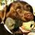 Austin Dog Whisperer