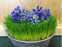 Roaring Oaks Florist, Lakeville CT