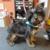 Doggie Spa