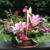 Ladybug Flower Shop Inc