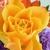Newport's Flowers