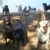 Dog Star Ranch