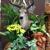 Lohse Florist