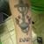 321 Tattoo studios
