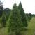 Pinetop Farm