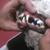 Iron Pet Mobile Grooming & Salon