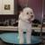 Waggers Pet Salon