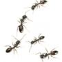 Omega Termite & Pest Control