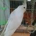 Louis Birds Pets & Supplies