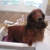 Bubbles 'N' Paws House-Call Dog Grooming
