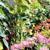 Magnolia Gift & Garden