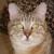 Forgotten Felines & Fidos Inc