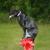 Off-Leash K9 Indianapolis Dog Training