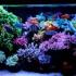 Elegant Reef