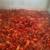 Louisiana Crawfish and Seafood, Inc.