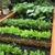 Grow Organic Vegetable Gardening
