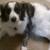 Indigo Rescue-Animal Rescue