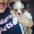 Prestigious Pets Dallas Dog Walking, Running and Pet Sitting Services