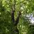 Ozark Tree Service