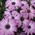 Brown Pleasance Florists