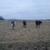 LCB Farms