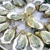 Best Crab House (Pine Hills Orlando Florida)