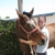 Balanced Horse Veterinary Service, PLLC