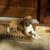 Winnsboro Animal Shelter