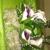 Buckhead Wright's Florist